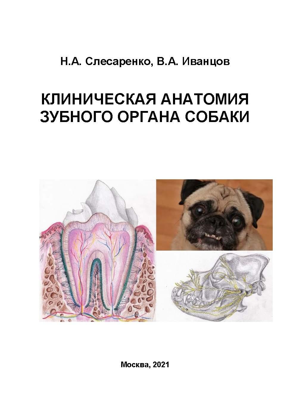 Клиническая анатомия зубного органа собаки (эл. вер.) (3 месяца)